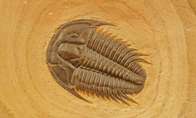 Sand Insect - Applied Cryptography Innovation - Cambrian Explosion - Transform Civilization
